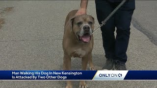Man walking his dog in New Kensington is attacked by two other dogs