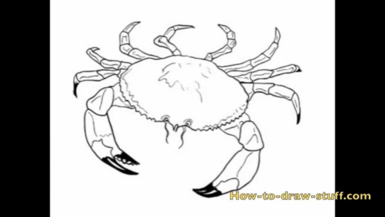 How to Draw a Crab Step by Step - YouTube  How to Draw a C...