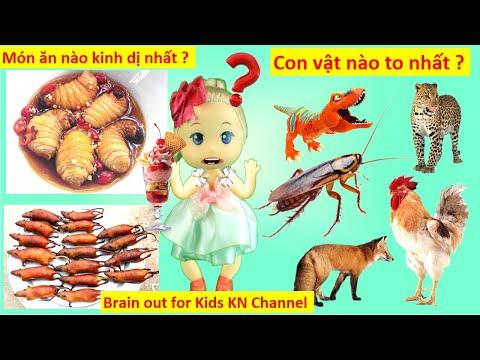 CÂU ĐỐ GIÚP TRẺ THÔNG MINH HƠN | TRÒ CHƠI Brain out for Kids KN Channel