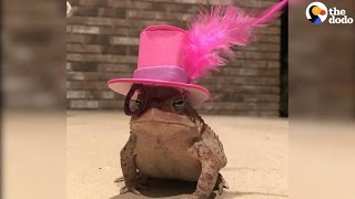Toad Hats: Guy Makes Tiny Hats For Toad | The Dodo