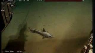 深海生物2
