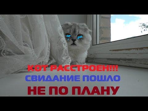 Картинки киеве на кота из из видео лепота тв, надписями