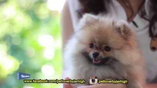 รายการ pet lover by jerhigh : 06092014
