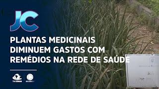 Plantas medicinais diminuem gastos com remédios na rede de saúde