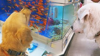 TRIP TO THE PET STORE - REACTING TO OTHER ANIMALS! (SCS #114)