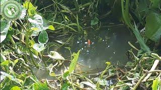 Câu cá ổ   Câu cá gặp ổ cá rô khủng nữa rồi thả xuống là ăn   Nguyên Khôi TV