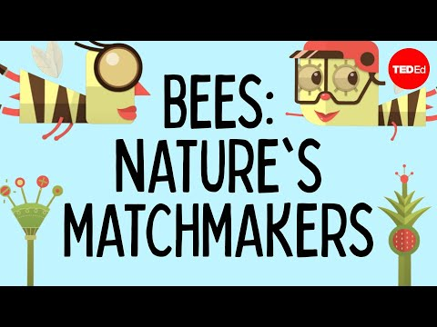 How bees help plants have sex - Fernanda S. Valdovinos thumbnail