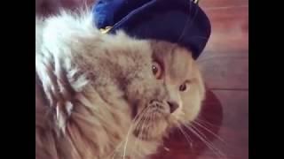 SUPER WEIRD CATS Happy cat cute cat funny cat 002