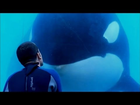 'Blackfish' Trailer
