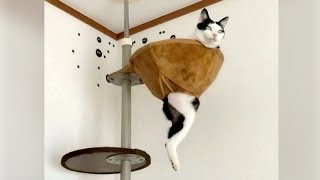 You will LAUGH HARD so DO NOT EAT or DRINK WHILE WATCHING, you may SUFFOCATE! - Funny CATS