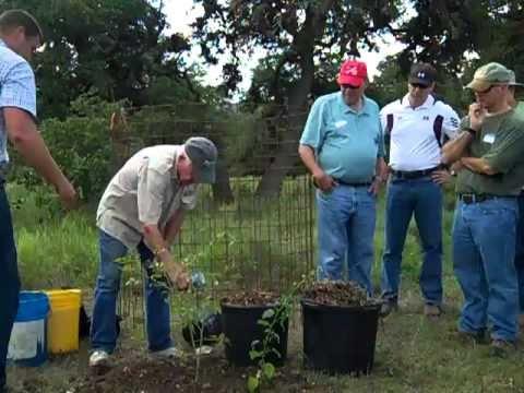Bamberger Ranch tree planting pt 2