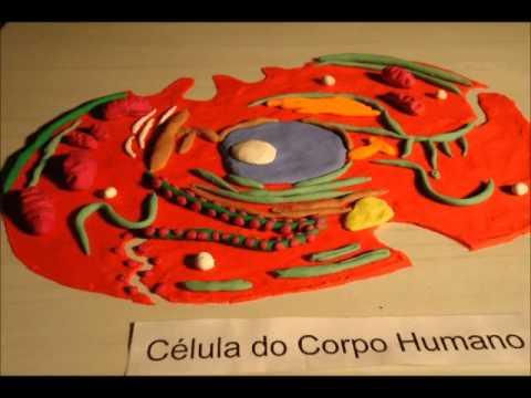 Célula do corpo humano