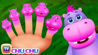 Finger Family Hippo | ChuChu TV Animal Finger Family Nursery Rhymes Songs For Children