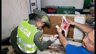 Policía le pone el ojo a la venta de pescado en Cúcuta