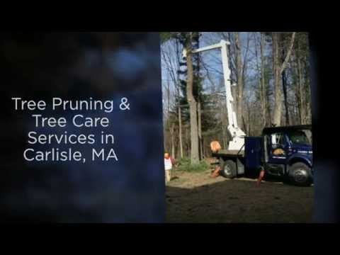 Tree Removal Pruning Service in 01741