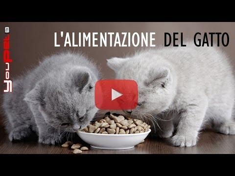 L'alimentazione del gatto