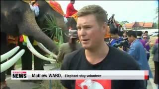 Thailand celebrates National Elephant Day   태국 코끼리의날