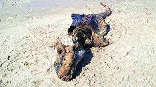 Woman In Wales Discovers This Mysterious Looking Creature On The Beach