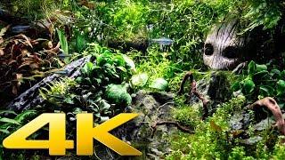 4K Planted Freshwater Aquarium Relaxation | Sleep Relax Study Screensaver