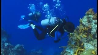 Sensaciones bajo el mar