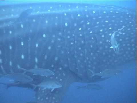Malibu Divers Galapagos Diving with Sharks