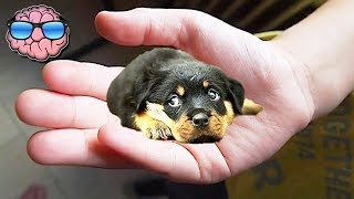 Top 10 SMALLEST DOG BREEDS