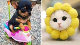 /baby animals funny cats and dogs videos compilation 2019 perros y gatos recopilacion 10