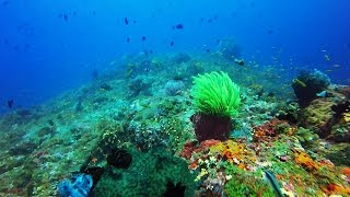 Scuba Diving in India, Andamans, Havelock  Dixon's Pinnacle v1