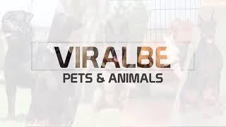The Animals..
