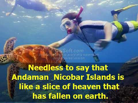Best Tour Operator in Andaman - Andaman Unlocked