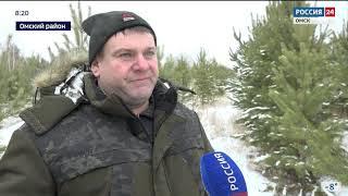 В лесничествах региона началась массовая заготовка новогодних ёлок