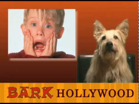 Bark Hollywood - Episode 11