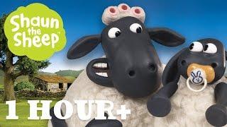 Những Chú Cừu Thông Minh - Tập 04 [một giờ]