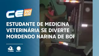 Estudante de medicina veterinária se diverte mordendo narina de boi