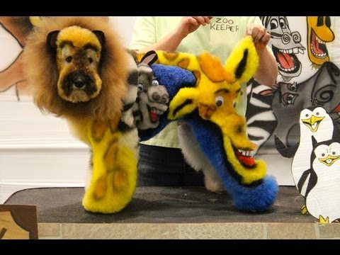 CREATIVE GROOMING COMPETITION AT INTERGROOM 2013 YouTube