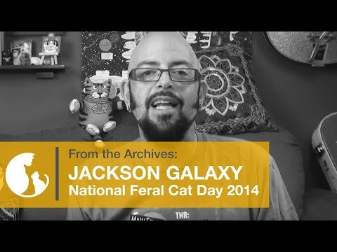 Jackson Galaxy - National Feral Cat Day® 2014 – TNR: From the Alley…To Main Street.