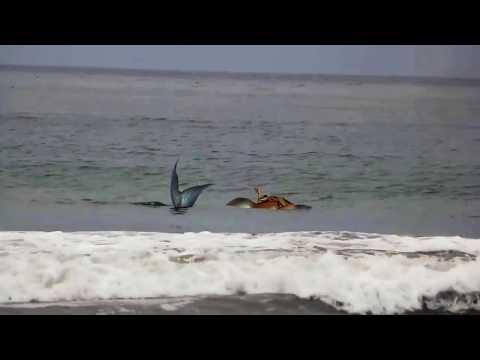 Sirena real de Israel encontrada viva