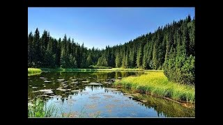 1 Hour of Relaxing Nature Sounds Birds Singing and Gentle Waves Birdsong Relaxation Meditation