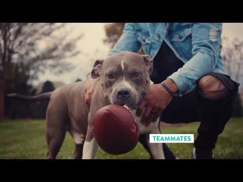 #AdoptPureLove – Shelter Pet Project – Logan Ryan PSA :15