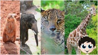 Cute Zoo Animals Baby Animals Giraffe Zebra Elephant Bear Tiger Gorilla Owl Rhino Kinder Playtime