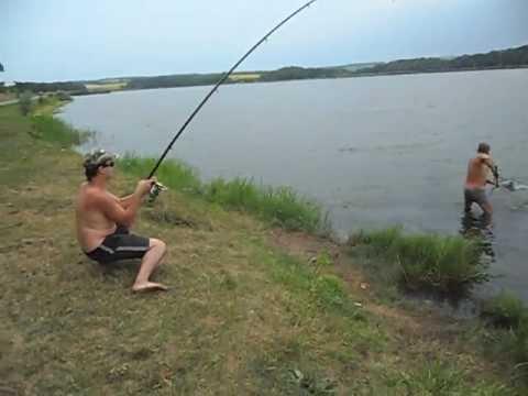 ловля толстолобика на фидер на реке