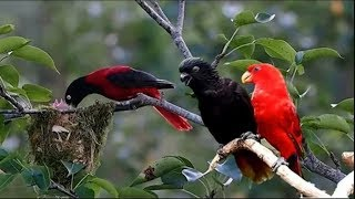 Nature And Wildlife Video – Bird and animal is beautiful creature on our planet