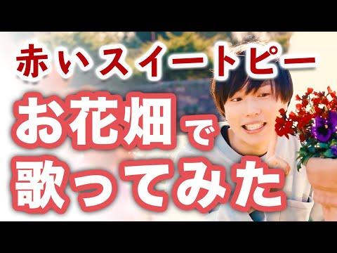 【男性カバー】赤いスイートピー / 松田聖子【お花畑で歌ってみた】
