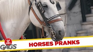 Best Horse Pranks - Best of Just For Laughs Gags