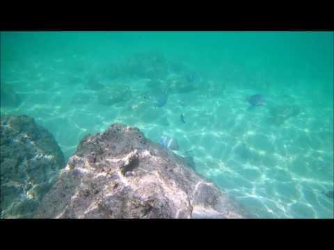 Plongée dans les eaux turquoises de Guadeloupe autour de l'Anse Bertrand !