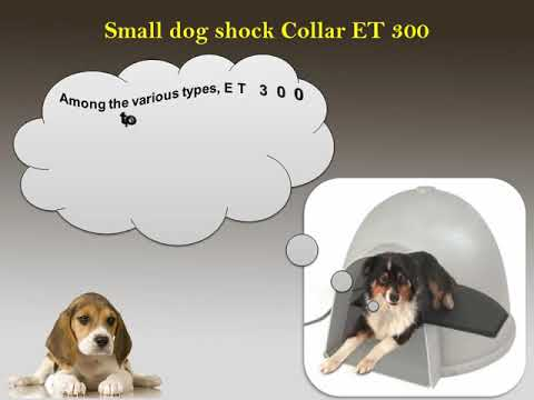 ET 300 Tops the List among all Small Dog Shock Collars