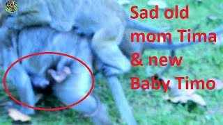 It's very sad mom Tima&her new baby Timo get hurt cos Popeye - Jill bite so strong
