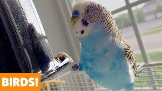 Cute Funny Birds | Funny Pet Videos