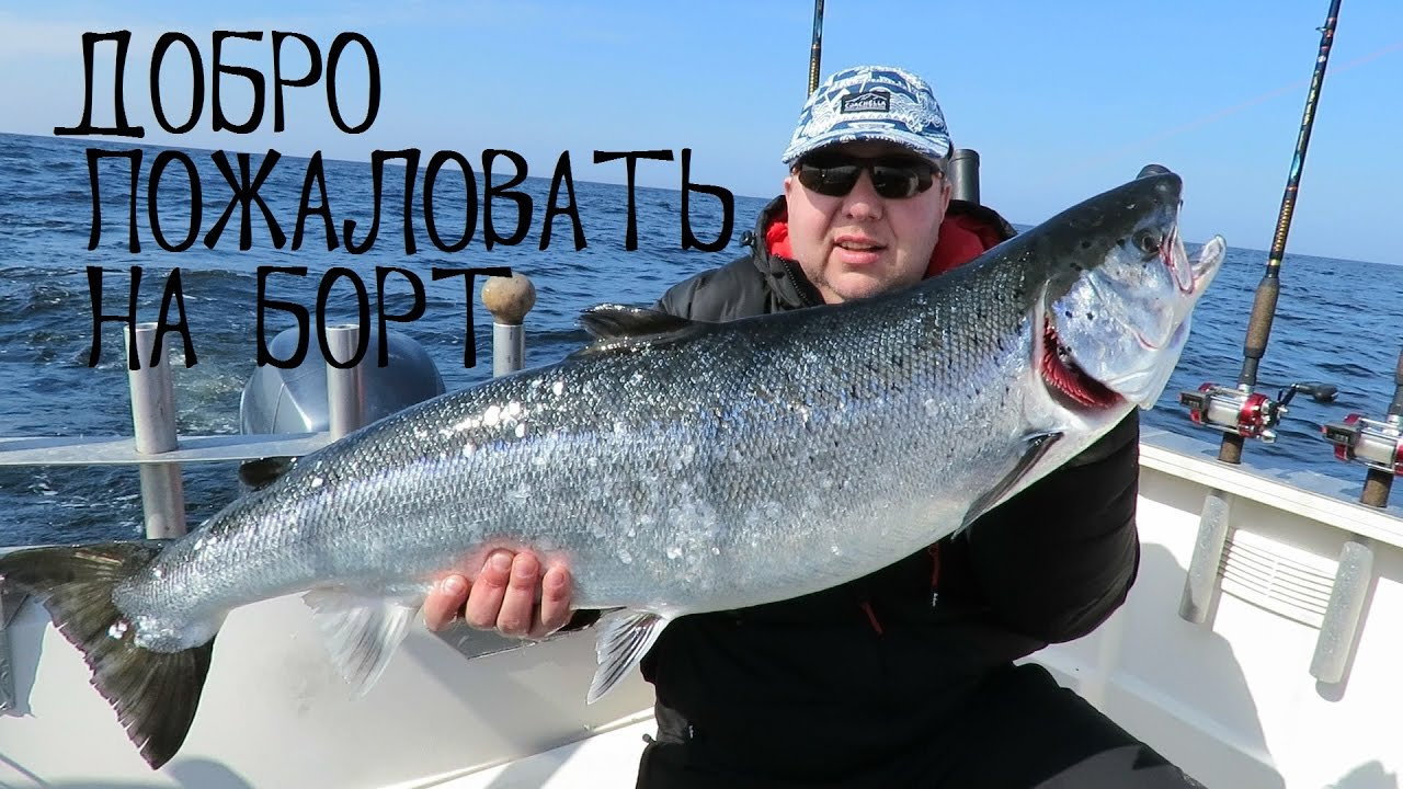 Троллинг лосося в финском заливе
