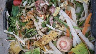 Chia sẻ cách ủ rác nhà bếp làm phân hữu cơ bón cho cây tốt cực kỳ